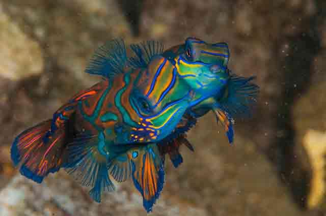 exotic under water animals