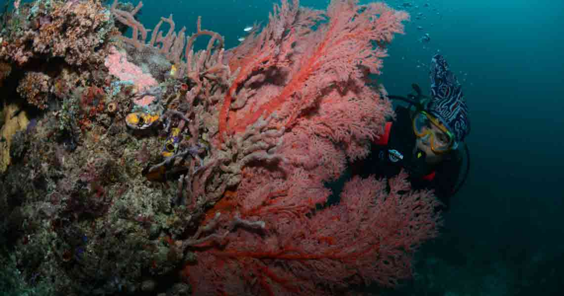 Why diving in indonesia