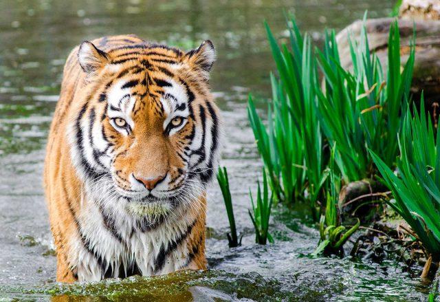 Bali Safari And Marine Park Admission Ticket Price Update