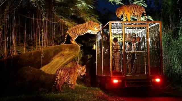 Night Safari Park Bali