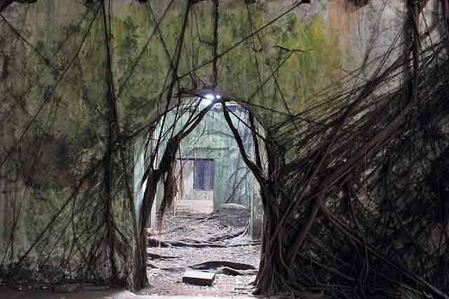 Root House Kota Tua
