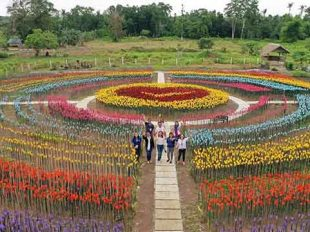 forever tulip garden