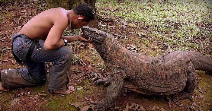 Komodo Dragons, The Largest Legendary Reptile Species in World History