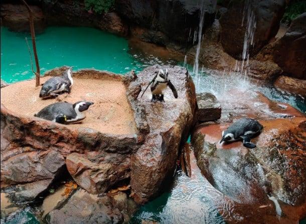The Dallas World Aquarium And Zoo